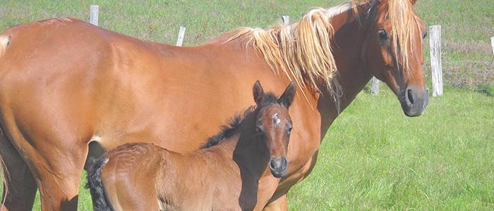 Location de poneys et chevaux à Saint-Sorlin-de-Morestel