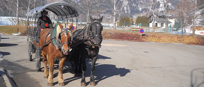 Composez votre attelage : choisissez votre voiture et vos chevaux